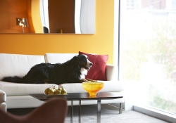dog friendly hotel in montreal